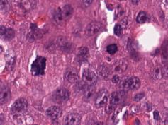 mitosis-04_56
